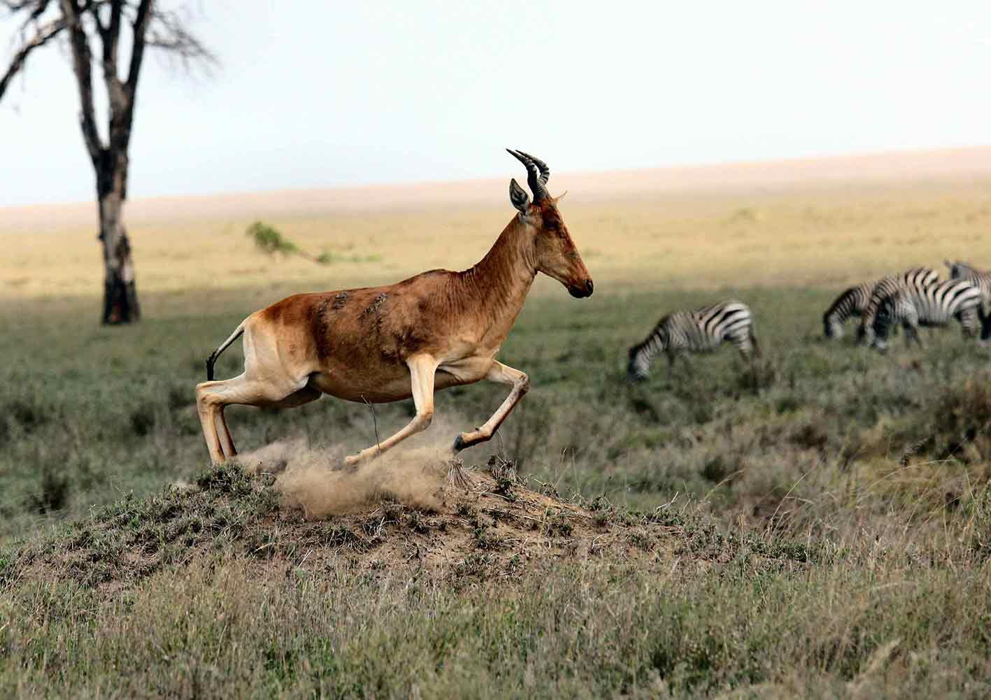 Safari Fotoshoot