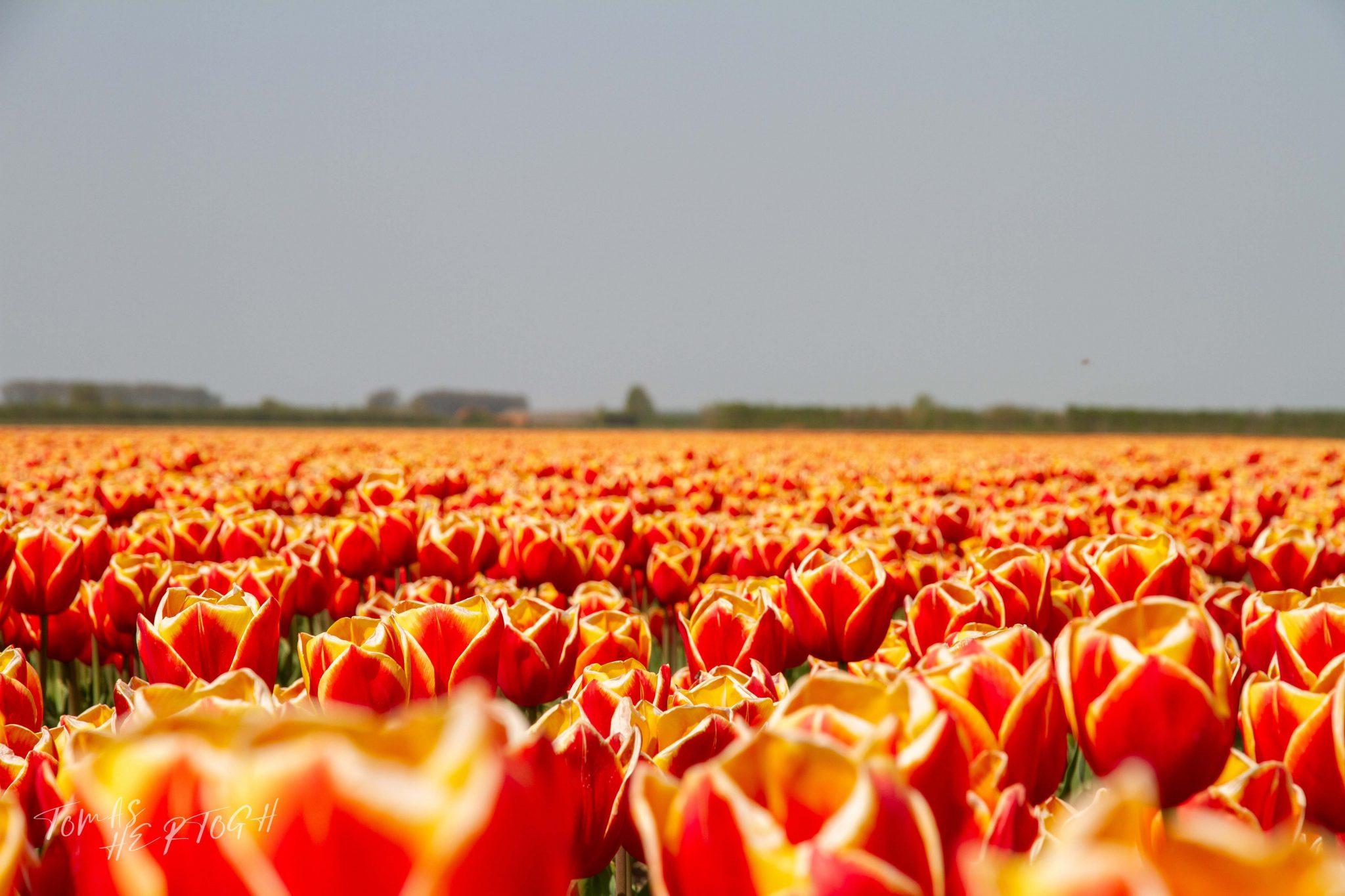Fotografie Nederland